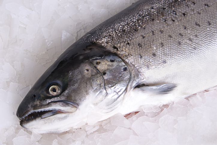 Norwegian Salmon Faced With Large Sales But Low Prices in Chinese Market