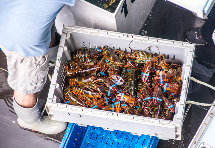 Maine Lobster Market Group Will Evolve Promotional Strategy After Increased Landings, Value in 2018