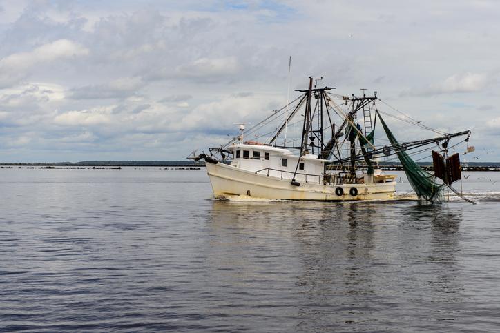 Georgia Shrimp Season Opening June 10