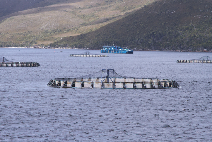 New Zealand Announces Ambitious Plan for $3 Billion Aquaculture Industry by 2035