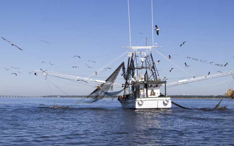 Louisiana Shrimp Landings Decline Due to High Water Events, Bonnet Carré Spillway