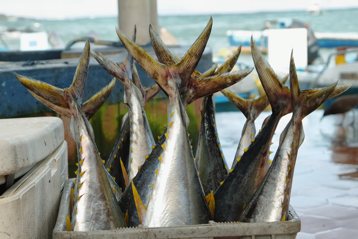 Ecuador Introducing Satellites to Combat IUU Fishing