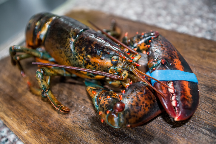 Marine Department of Marine Resources Nets Funding for Boost Lobster Health Research