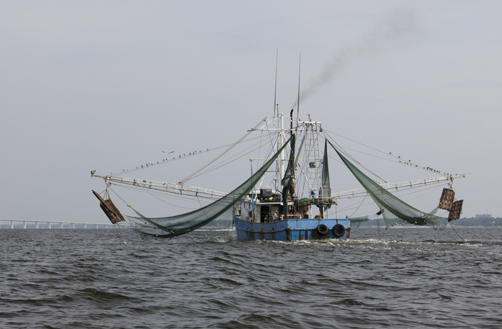 ASPA Reinforces That Commercial Wild-Caught Shrimp from Gulf of Mexico is Safe to Eat