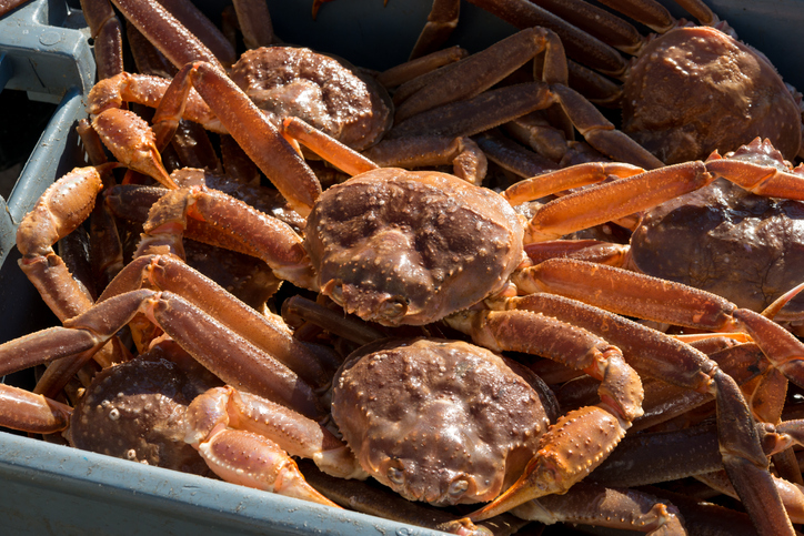 Kodiak Tanner Crab Fishery Starts Next Week