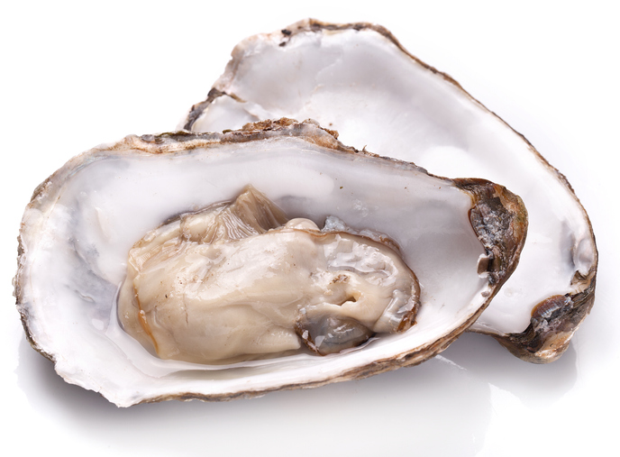 Oyster Growers Aim to Triple Production at Homer