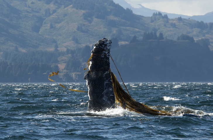 West Coast Whale Entanglement Causes, Solutions Detailed in New Report