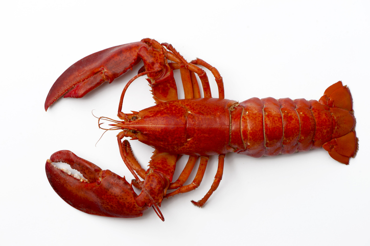ANALYSIS: Lobster Imports Increase in September, Led by a Surge from Canada