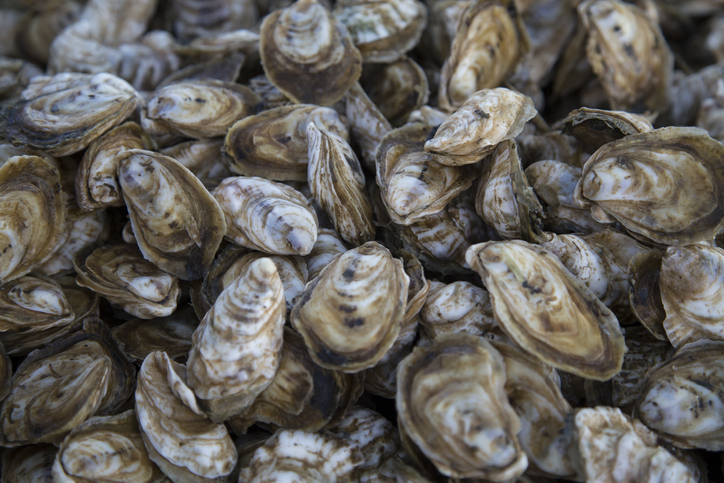 Georgia Oyster Harvesting Season Closing June 1