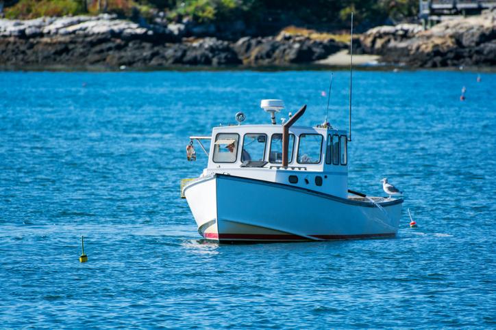 Maine Congressman Jared Golden Introduces Amendment to Block Right Whale Regulations