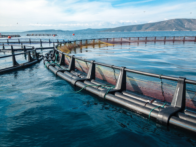 New Paper Provides Scenarios for the Future of Aquaculture in Human Nutrition