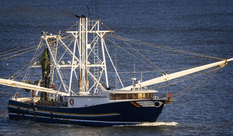 Gulf Shrimp Landings Beat Historical Averages Through April 2021, Reach Highest Mark in 4 Years