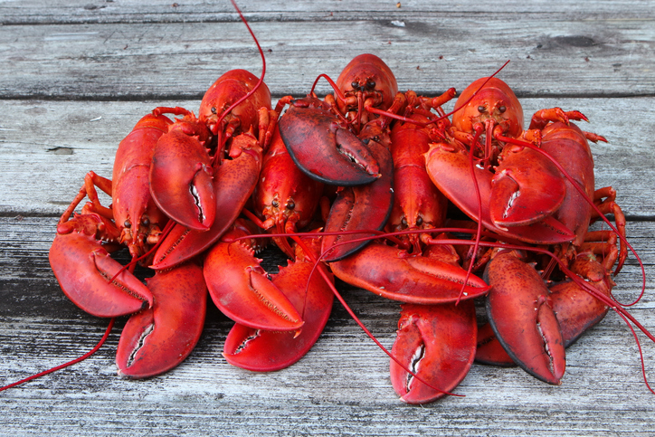 Nova Scotia Officially Declares February 28 as Lobster Day