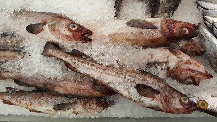 Trade War with China Continues to Pressure Alaska Pollock Industry