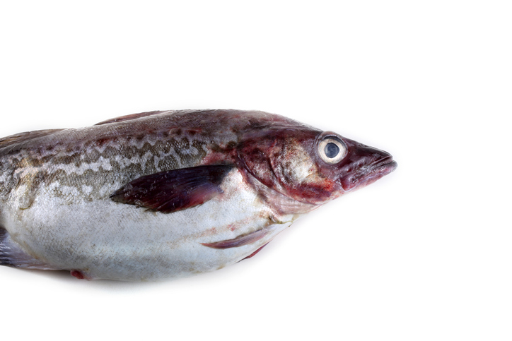 Funds for Alaska Pollock Products, Market Inroads