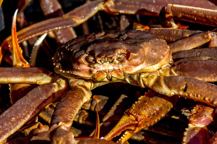 DFO Announces Area 12 Snow Crab Total Allowable Catch; 2021 Quota Decreases Again