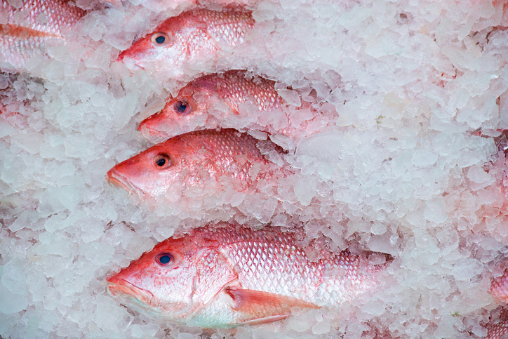Great Red Snapper Count Unlikely to Make a Mark on 2021 Fishing Season