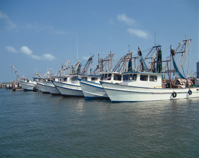 NMFS, SSA Report Poor Gulf of Mexico Shrimp Landings in July