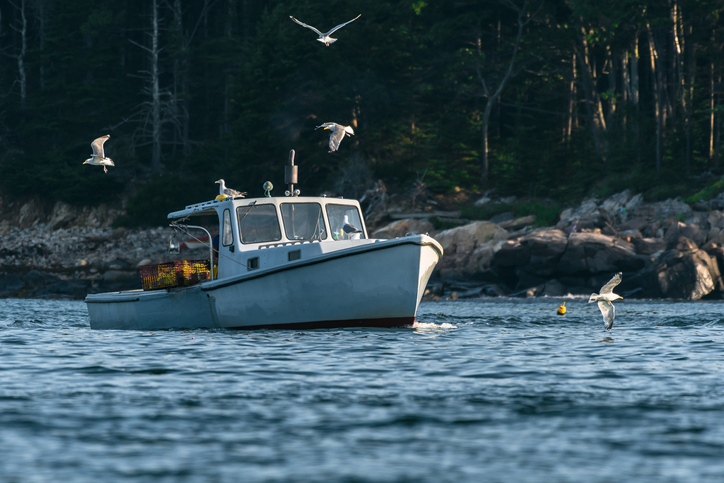 Maine Lobster Harvesters Landed Over 100 Million Pounds in 2019