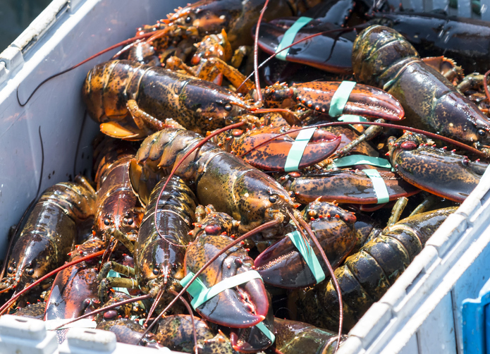 US Tries to Get Mini-Deal Tariff Relief on Lobsters from EU, but No Dice