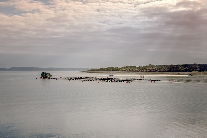 Chilean Salmon Making Its Way to the States as National Strikes Stall the Country