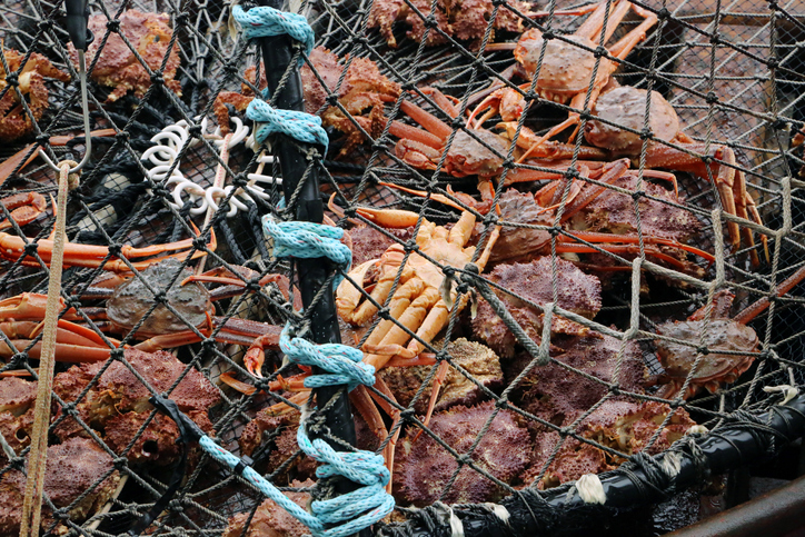 Crabbers Pull Up Record Catches in the Gulf of Alaska