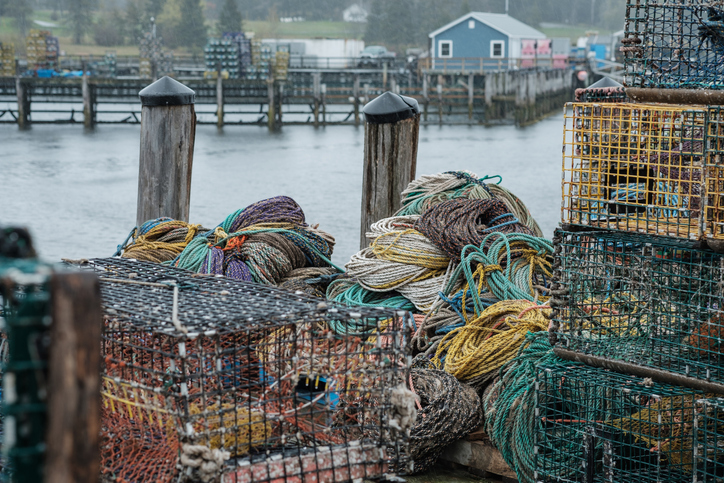 Maines Lobster Industry Braces for Catastrophic Cuts to Bait Fish Catch