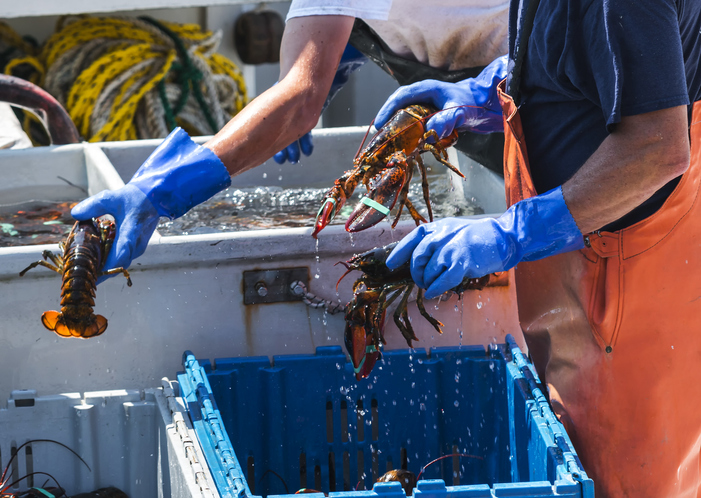 It's April. Why are Live Lobster Prices Falling Like a Stone?