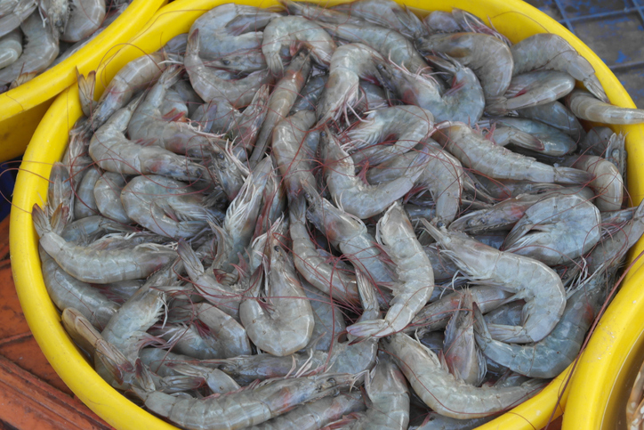 India Shrimp Rejections for Antibiotics Spike in January 2019
