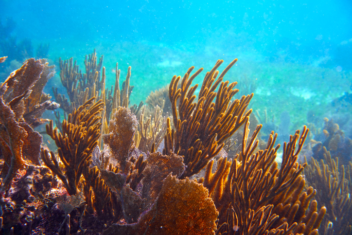 NOAA's Coral Reef Conservation Program Awards Over $8.3 Million in Grants