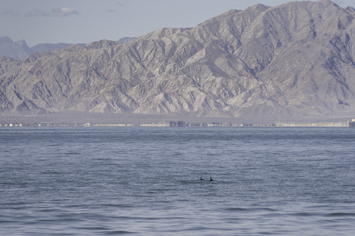 Mexican Seafood Ban in U.S. Expanded in Effort to Save Vaquita Porpoise From Extinction