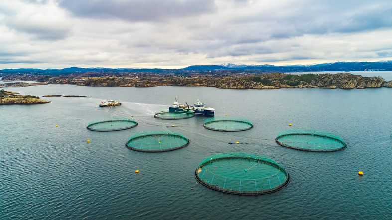 Norwegian Seafood Sector Pivots to Frozen Fish as Production Continues During Pandemic