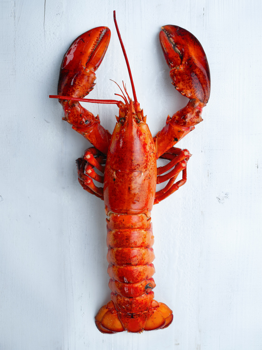 What Happens With China Likely to Determine Prices on Lobsters this Spring