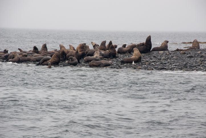 Two Alaska Fishermen Sentenced for Harassing, Killing Steller Sea Lions