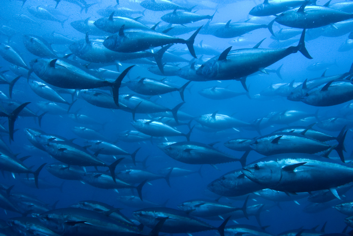 Industry-Led Tuna Coalition Created to Clean Up Supply Chains