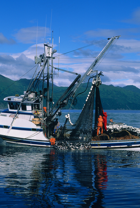 Kodiak Loses Salmon to Chignik, Cook Inlet