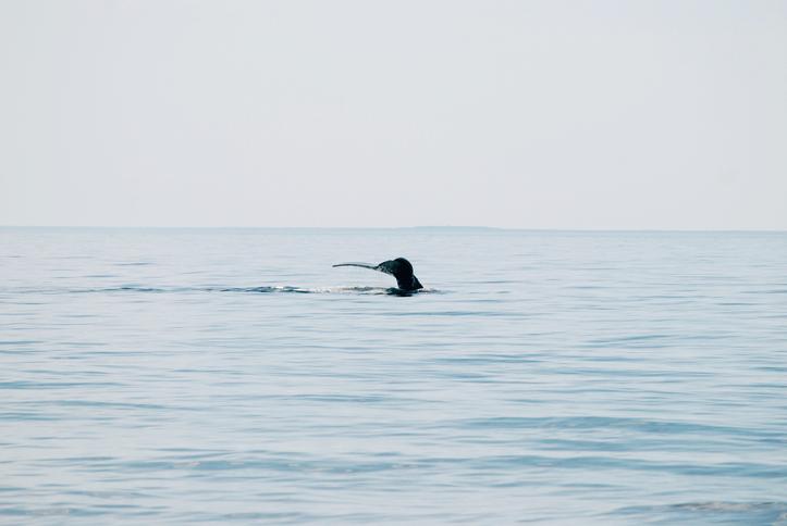 NOAA Administrator Talks Recent U.S.-Canada Meeting on North Atlantic Right Whale Mortalities