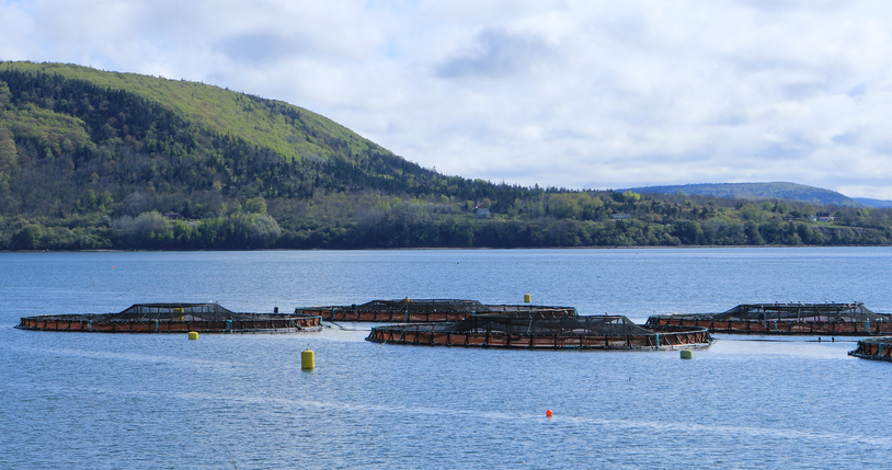 Canada Releases State of Salmon Aquaculture Technologies Report After Lengthy Delay
