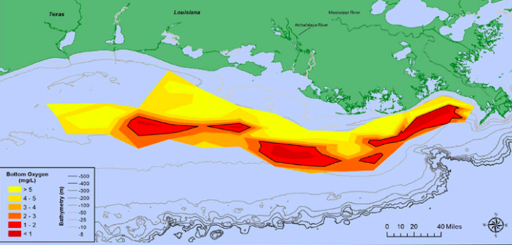 "Gulf of Mexico ""Dead Zone"" Smaller Than Forecasted"