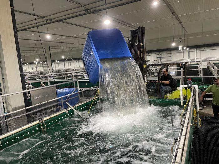 NaturalShrimp Begins Shrimp Transfer to Iowa Grow-Out Tanks; Acquire Assets of Aquaculture Tech Firm