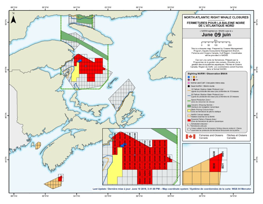 DFO Announces New Temporary Fishing Closures in Gulf of St. Lawrence Due to Right Whales