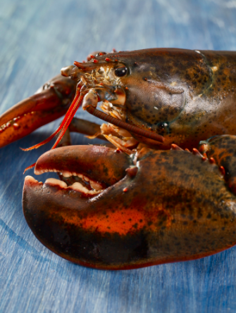MLMC Executive Director Gives Update on Efforts to Increase Demand for Maine Lobster