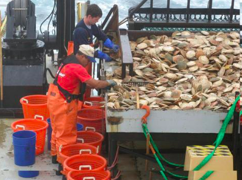 NOAA Taking Emergency Action to Reduce Economic Harm to Atlantic Sea Scallop Fishery