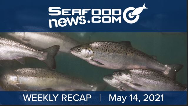 VIDEO: AquaBounty Sells Out; Mexico Shrimp Update; Stavis New VP of Operations and More