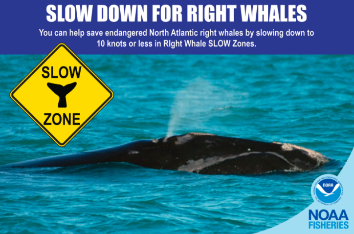 NOAA Launches Right Whale Slow Zones Campaign