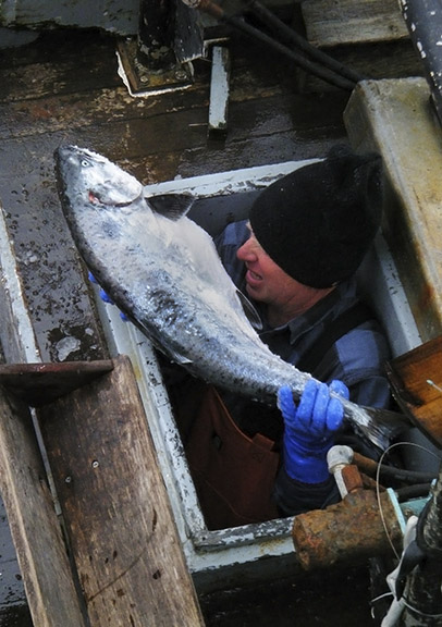 West Coast Salmon, Sardine Fisheries to Receive $18 million in NMFS Disaster Funding