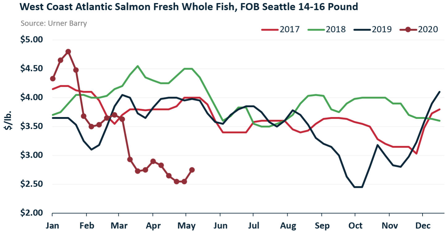 ANALYSIS: Bigger Canadian Whole Fish Beginning to See an Uptick in the U.S. Market