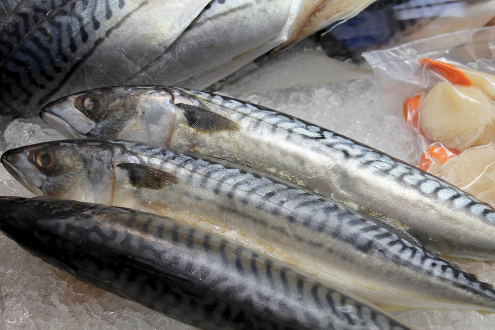 MSC Suspends all North East Atlantic Mackerel Certificates, Pending ICES Review of Stocks