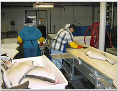 Icicle's Jessie Keplinger Named First Female President of Halibut Association of North America