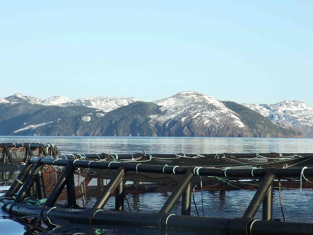 Marine Harvest Completes Deal for Northern Sea Farms, After Quick Action by Competition Bureau